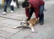道に寝そべる犬