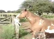 ネコを咥える馬