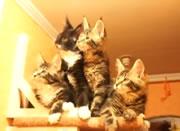 気になるのはみんな一緒。可愛いネコ達
