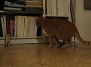 メトロノームが気になるネコ