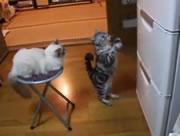 これは可愛い!立っておいでおいで(?)するネコ