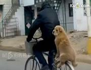 自転車の後部に大人しく乗るワンちゃん