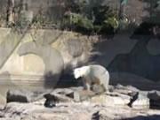 白クマ ベルリン動物園での最期