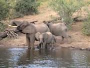象の鼻にかみつくワニ