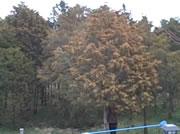 木を揺らして花粉を散らしてみる