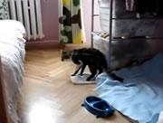 ネコのジャンプ失敗