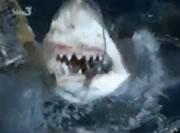 サメに魚を与えて頭を叩く女性