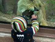 チビちゃんとライオン