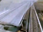 列車が近づいても避けない牛