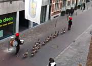 カモのパレード