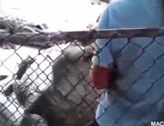 ワニに手を噛まれる飼育員