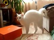 プッっと笑えるネコの動画