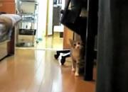 ネコとだるまさんが転んだ