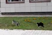 ネコ vs 犬