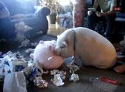 ぬいぐるみを枕にして寝る豚