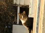 ジャンプして柱に激突するネコ