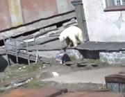 女性を襲う白クマ
