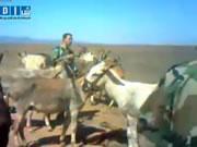 ロバを射殺する兵士