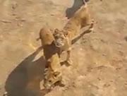 ライオンに餌をあげられる動物園