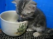可愛いすぎる!カップと子猫