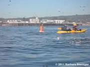 女性サーファーの近くに現れる鯨