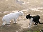 ネコの睨みあい