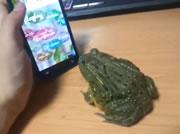 カエルとゲーム