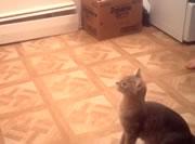 テーブルへジャンプ失敗するネコ