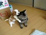 ネコにじゃれる可愛いワンちゃん