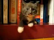 ちょー可愛い!棚の段差から頭を下げたまま寝るネコ