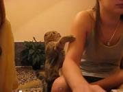 飼い主の女性に甘えるネコ
