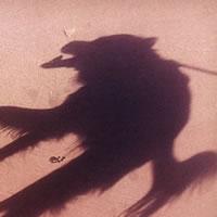 まるで悪魔の使いのような影の正体は・・・