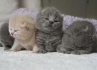 可愛いすぎる子猫たち