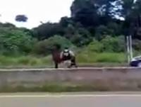 道路脇に現れた馬を射殺する警官