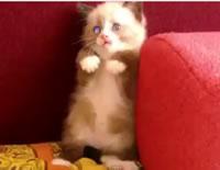 掃除機を怖がるネコが超可愛い
