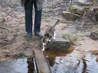 橋を渡るネコの歩き方が可愛い