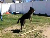 縄跳びが上手なワンちゃん