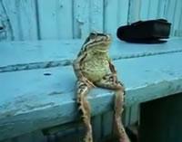 まるでリラックスするように座るカエル