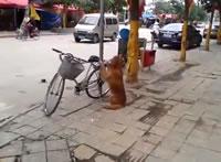 まるで自転車を見守っているようなワンちゃん