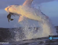 Slow Motion Shark Attack