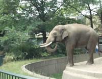 象撮影のハプニング