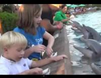 イルカに魚を与えてる女の子の手をパクリ