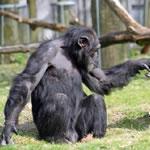 人前で大胆な猿