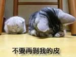 某国の犬・猫から毛皮を取る映像