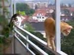 ネコの平衡感覚